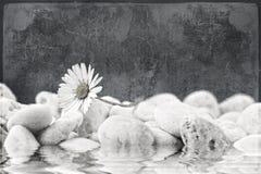 在海滩的雏菊。 花卉grunge背景 库存照片