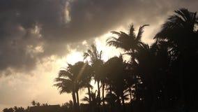 在海滩的风吹的棕榈树 影视素材