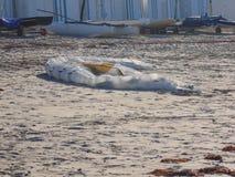 在海滩的风筝冲浪的风帆 免版税图库摄影