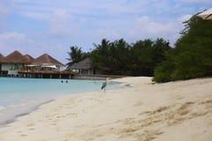 在海滩的马尔代夫灰色氖 免版税库存图片