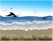 在海滩的鲸鱼的尾巴 库存图片