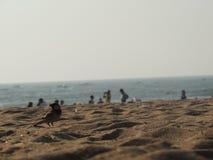 在海滩的麻雀 免版税库存图片