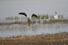 在海滩的Pelacns湖 免版税库存照片