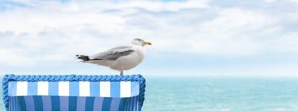 在海滩睡椅的海鸥 图库摄影