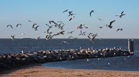 在海滩群飞行海鸥urk之上 免版税库存图片