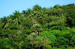在海滩附近的绿色森林 库存照片