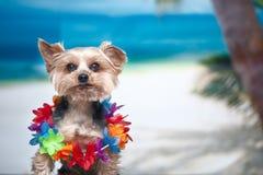在海滩,休闲的概念的狗,我在vac要去 库存照片