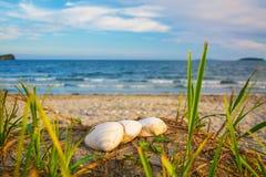 在海滩,在沙子的波浪,壳的明亮的金黄日落 免版税库存照片