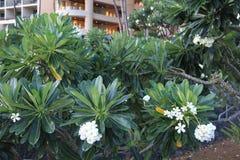 在海滩 海 沙子晃动夏威夷自然 晴朗的棕榈树水池 图库摄影
