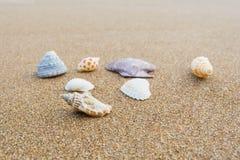 在海滩38的贝壳 库存照片