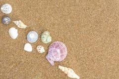 在海滩34的贝壳 免版税图库摄影