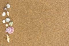 在海滩36的贝壳 免版税库存照片