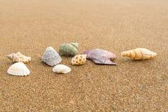在海滩32的贝壳 库存图片