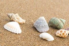 在海滩31的贝壳 库存图片