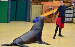 在海狮展示的女孩教练员 免版税库存照片