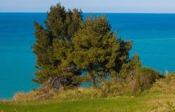 在海的两棵杉木 图库摄影