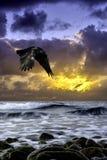 在海的剧烈的日出有飞行掠夺的-古韦斯,克利特 免版税图库摄影