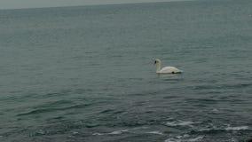 在海的天鹅 股票录像