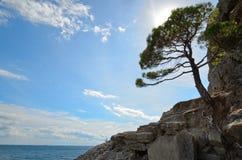 在海的岩石岸的杉树反对天空与由后面照,克里米亚的 免版税库存图片