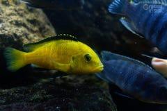 在海的底部的美丽的多彩多姿的鱼 热带海洋动物区系 库存图片