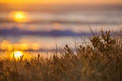 在海的日出通过草 库存图片