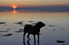 在海的日落有一条大狗的 库存图片