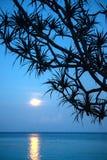 在海的月光 库存图片
