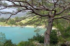 在海的杉木 免版税库存照片