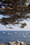 在海的杉树细节和小船 免版税库存照片