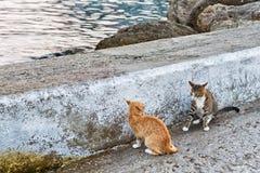 在海的激烈争斗 库存照片