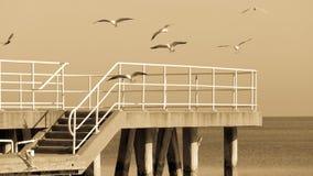 在海的空的码头跳船 苹果覆盖花横向草甸本质星期日结构树 免版税图库摄影