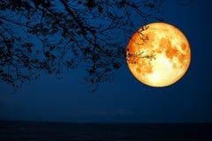 在海的纯种月亮剪影干燥树 库存照片