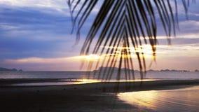 在海的美丽的景色通过棕榈树的被弄脏的分支 热带海滩的日落 免版税图库摄影