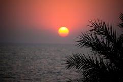 在海的美好的日落在一个热带国家 太阳通过棕榈树的叶子发光 免版税库存图片