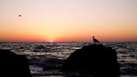 在海的美好的金黄日落日出,完全安静,飞行海鸥 股票录像