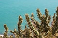 在海的背景的仙人掌 免版税库存照片
