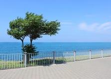在海的背景的偏僻的树 库存照片
