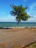 在海的背景的花 免版税图库摄影
