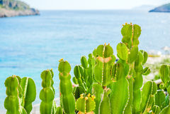 在海的背景的绿色仙人球,特写镜头 免版税库存图片