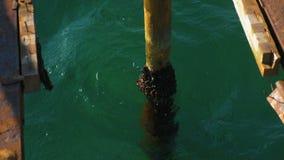 在海的被毁坏的老木码头 生锈的钢制框架,修理 股票视频