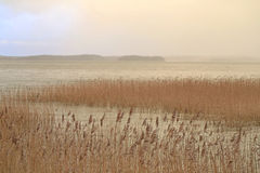 在海的雾在冬天 库存图片