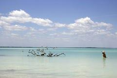 在海的鸟 免版税库存照片