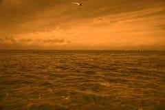 在海的鸥在晚上 库存图片
