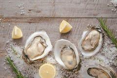 在海盐和柠檬的十二只新鲜的牡蛎 顶视图 免版税库存照片