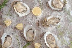 在海盐和柠檬的十二只新鲜的牡蛎 顶视图 图库摄影