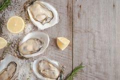 在海盐和柠檬的十二只新鲜的牡蛎 顶视图 库存照片