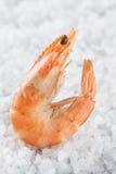 在海盐存放人的虾  在白色背景的一只未加工的虾 宏指令 免版税库存图片