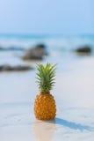 在海背景的菠萝 免版税图库摄影