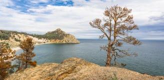 在海角的孤独的被烧的杉木 库存图片