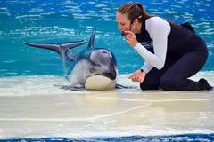 在海豚展示的女孩教练员 库存照片